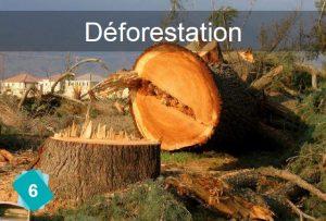 fresque-du-climat-carte6-deforestation